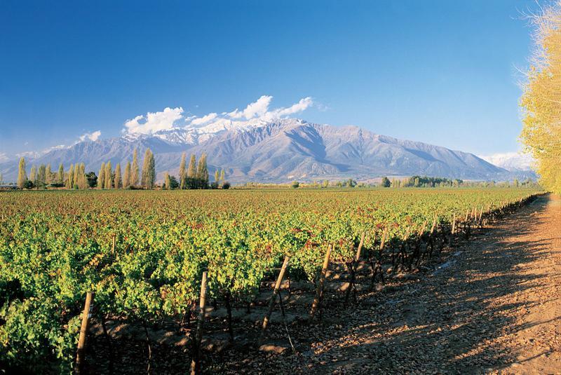 10 Khu Vực Sản Xuất Rượu Vang Nổi Tiếng Thế Giới